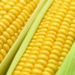 Receita Tradicional De Curau Com Milho Verde E Canela Em Pó – Que Delícia