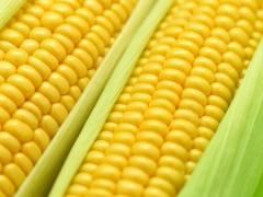 Receita Tradicional De Curau Com Milho Verde E Canela Em Pó – Que Delícia.