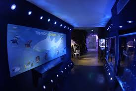 aquario-area-tubarao
