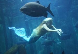 aquario-mirella-ferraz-sereia-sp