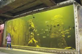 aquario-sp-imagem