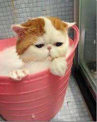 gato-banho