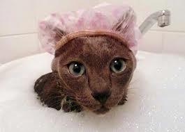 Cuidados de Como Dar Banho em Gatos – Dicas e Vídeo