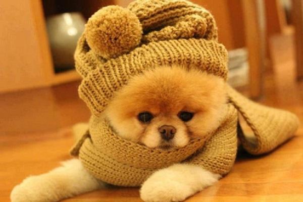 Dicas de Cuidados Com Seu Cão no Inverno – Saiba Mais