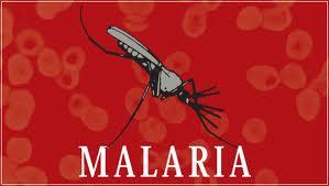 Contra Malária Vacina Experimental Imita Picada de Mosquito – Saiba Mais