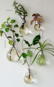 vaso-lampada