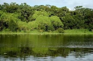 bioma-amazonia