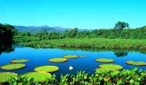 bioma-brasil-pantanal