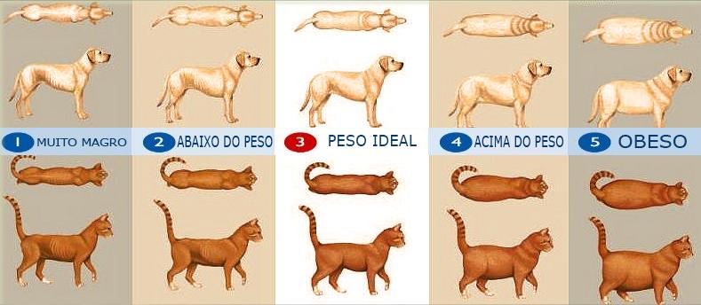 medir-obesidade-animal