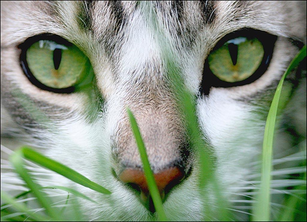 gato-doenças