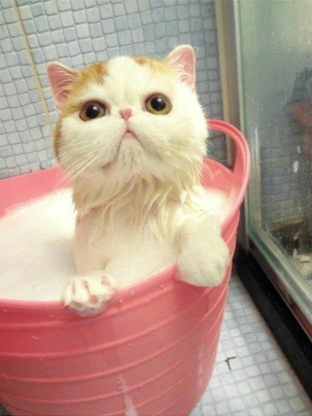 Como Dar Banho em Animal de Estimação – Dicas