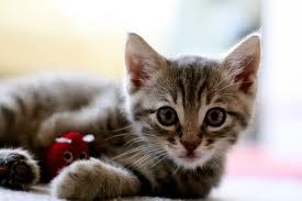 gatos-doenças-comuns