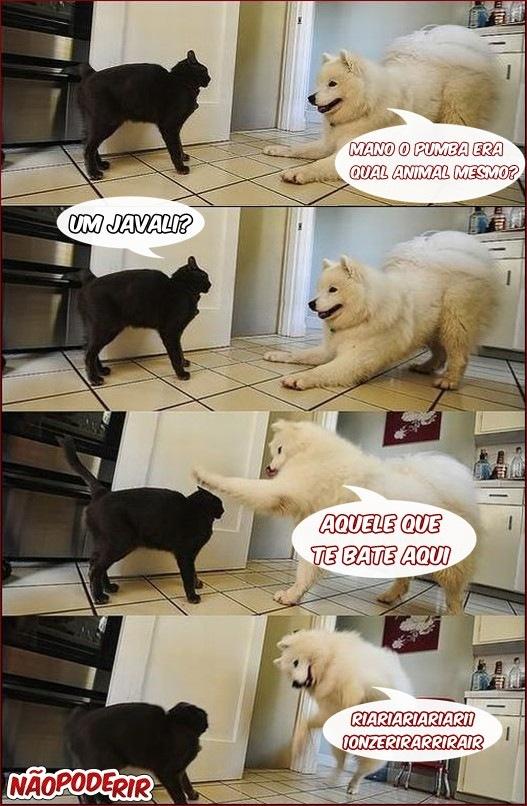 pegadinhas-cachorro-gato