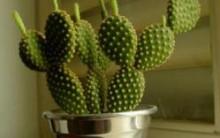 Cactos Como Cultivar – Saúde da Planta – Como Drenar o Solo