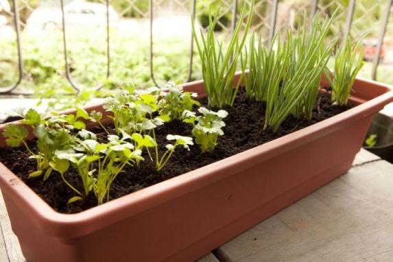 horta-plantas-aromáticas