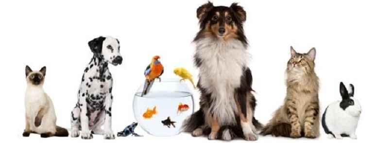 Nomes Divertidos Para Animais de Estimação - Dicas