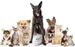 Nomes Divertidos Para Animais de Estimação – Dicas