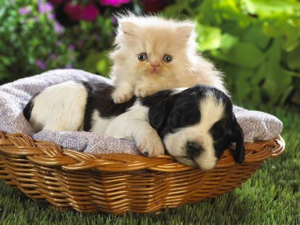 Como e Onde Adotar Gatos e Cães Abandonados – Locais