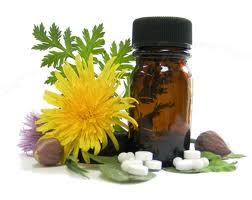 Plantas e Suas Propriedades Medicinais – Dicas