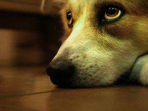 depressao-cachorro