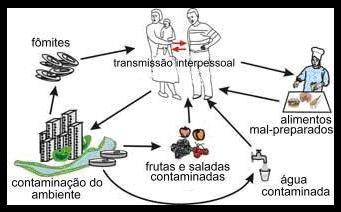 Hepatite a - sintomas, causas, tratamento, transmissão, prevenção e vacina. Transmissão