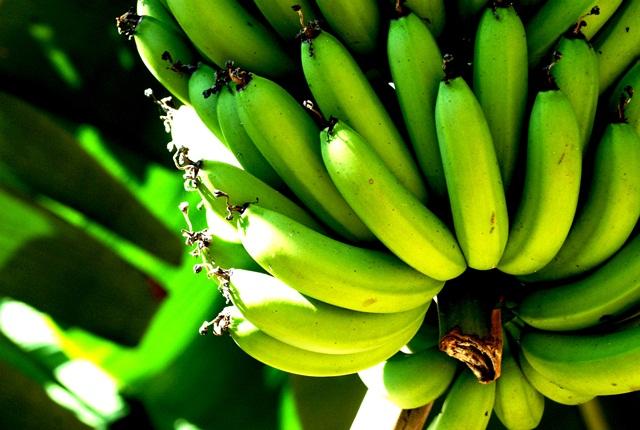 biomassa-banana-verde-receitas