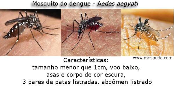 mosquito-da-dengue-repelente-caseiro