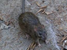 Ratoeira de Garrafa Pet – Material, Dicas de Como Fazer