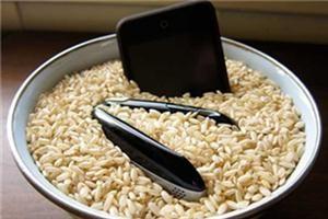celular-molhado-arroz