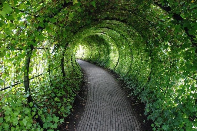 Jardim-venenoso-caminho