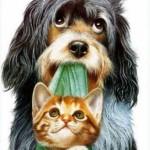 Adotar-Cão-Gato