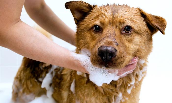 Shampoo-de-Bêbe-cão