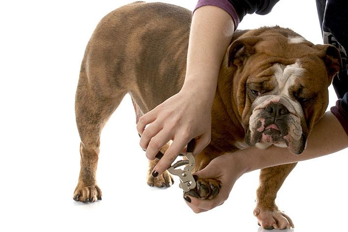 Unhas de Cachorro – Como Cortar e Vídeo