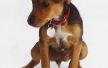 Cheiro de Cachorro Na Casa – Como Tirar Receita Caseira