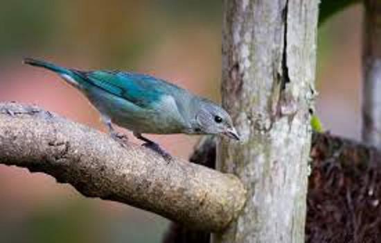Comedouro e Abrigo Para Pássaros – Como Construir