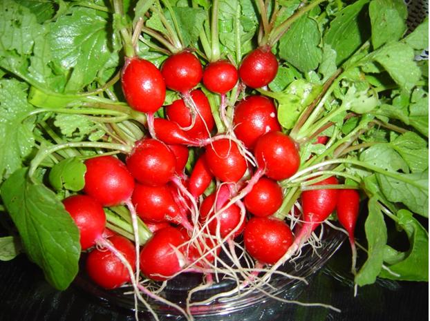 Rabanete ou Raphanus Sativus – Quais Benefícios para Saúde