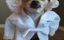 Animais e Tratamentos Estéticos – Quais os Cuidados