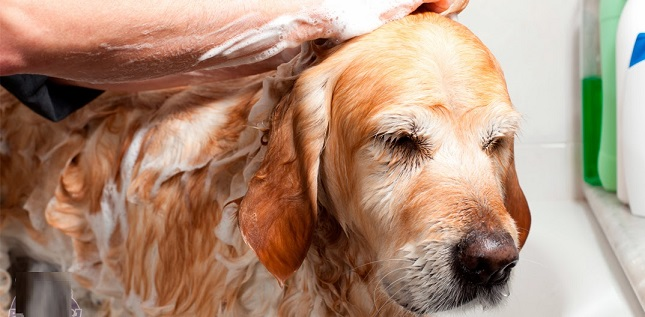 Animais-e-tratamentos-xam