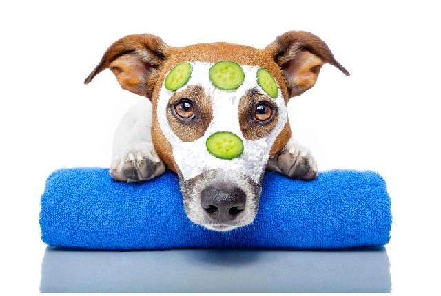 Animais-e-tratamentos