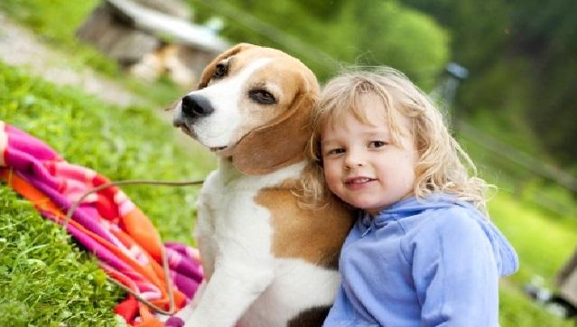 Cachorros Dóceis beagle