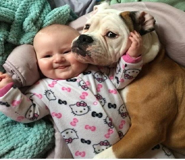 Cachorros Dóceis – Quais São e Suas Características
