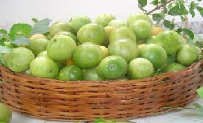 Fruta Umbu – Benefícios e Receita de Geleia