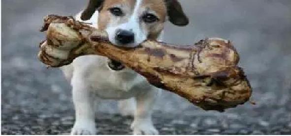 Pet nas Férias alimento
