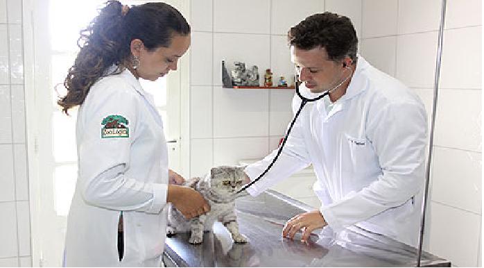 Pet nas Férias veterinário