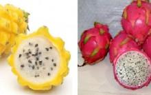 Pitaya Fruta Que Emagrece – Benefícios e Receitas