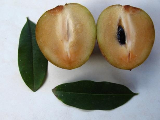 Sapoti-fruta