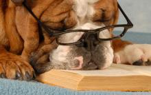 Cães Idosos – Problemas Frequentes e Cuidados