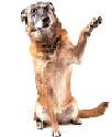 cães-idosos-ddd