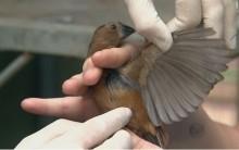 Pássaros de Estimação – Cuidados e Como Organizar