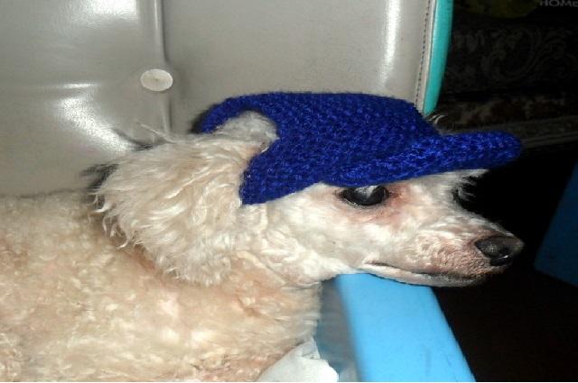 Cuidados Com os Cães no Verão boné